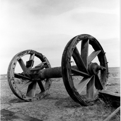 Bull Wheel On The Plains