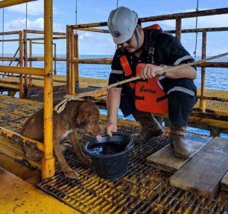 A dog found swimming more than 135 miles from shore by an oil rig crew in the Gulf of Thailand was returned safely to land.