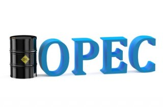 After almost a year of painfully low oil prices, OPEC members are beginning to believe they are winning against upstart U.S. shale producers in a short-term market share contest